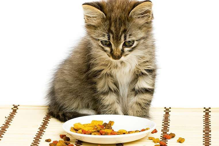 alimentation chat