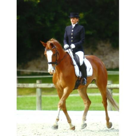 equitation