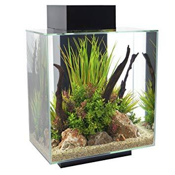 aquarium fluval edge
