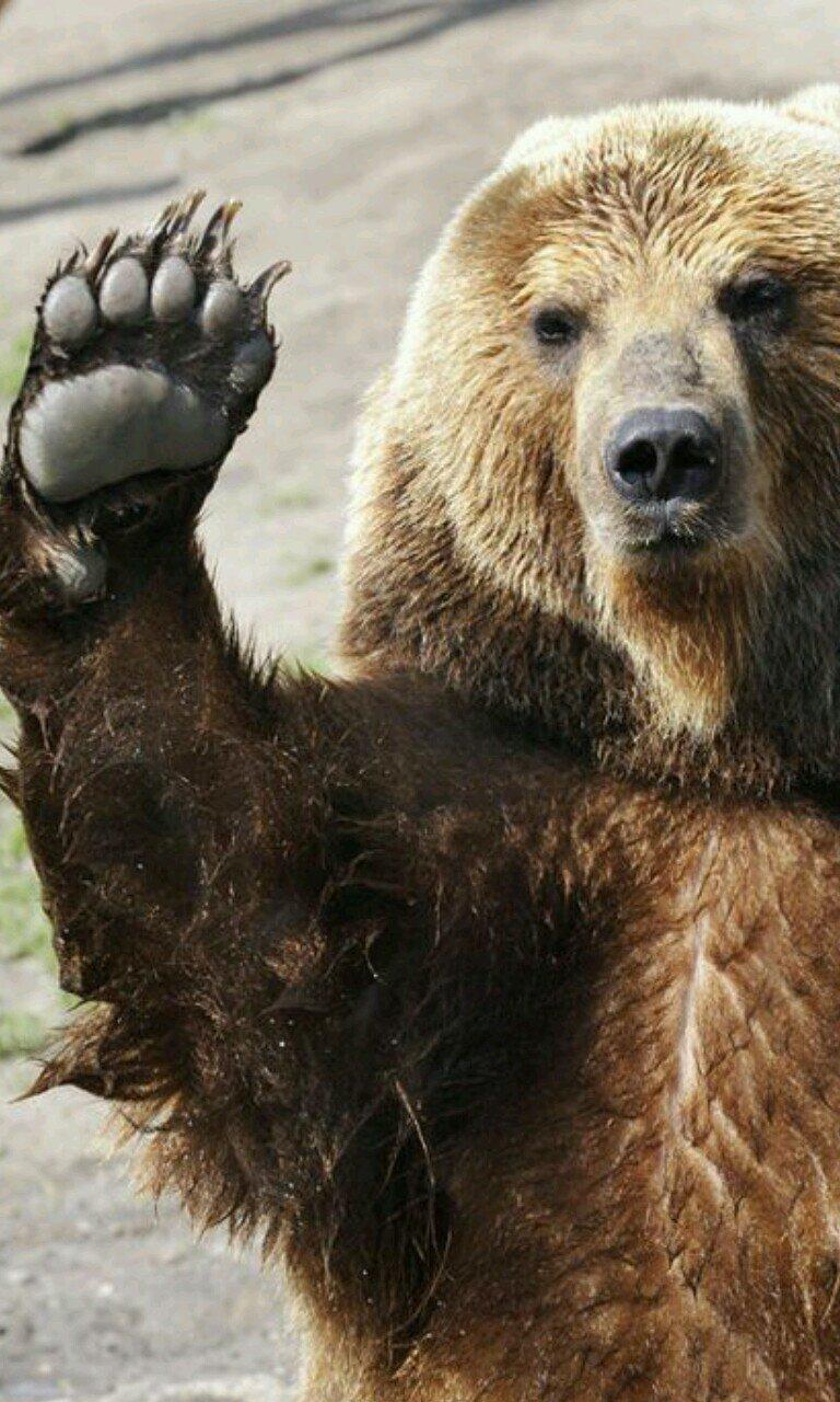 bear chat