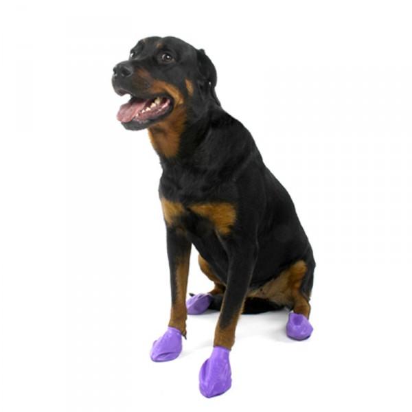 bottines pour chien