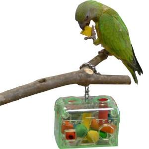 jouet pour perroquet