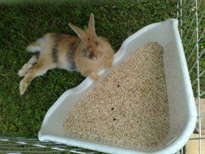 litière pour lapin